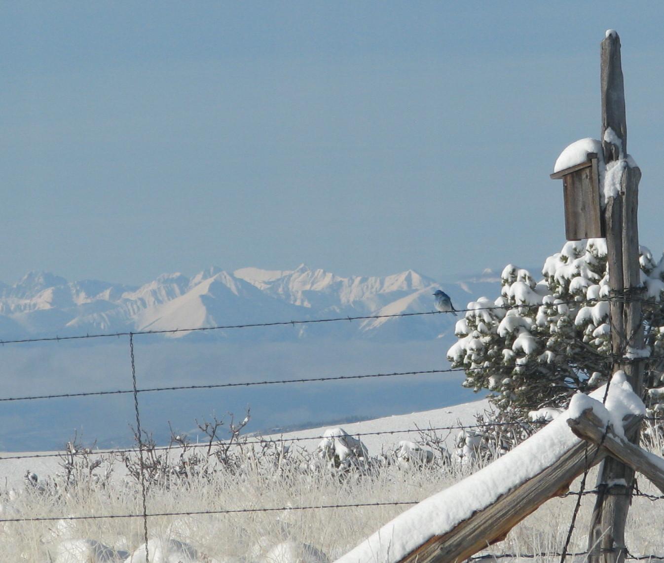 bluebird snow