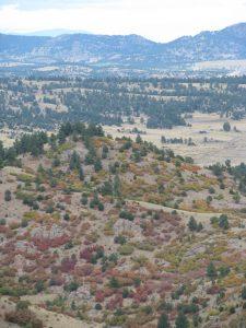 fall foliage: scrub oak